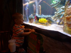 RC yellow fish