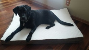 Jack got a new bed...so he now has 1 for each level
