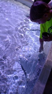 Adam feeding the stingrays