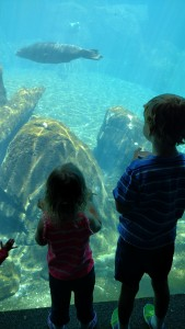 the kids watching the sea lions swim. They were so fun!